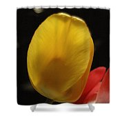 Yellow Bellied Shower Curtain