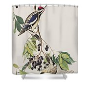 Yellow Bellied Woodpecker Shower Curtain