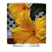 Yellow Belly Shower Curtain