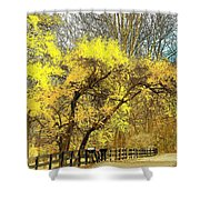 Yellow Bend Shower Curtain by Joyce Kimble Smith