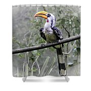 Yellow Billed Hornbill Shower Curtain