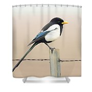 Yellow-billed Magpie Shower Curtain by Wingsdomain Art and Photography