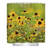 Yellow Black Eyed Susan Wildflowers In Summer Shower Curtain