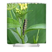 Yellow Black  White Caterpillar Shower Curtain