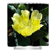 Yellow Bonnet, Cactus Shower Curtain