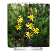 Yellow Bouquet On The Trail Shower Curtain