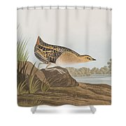 Yellow-breasted Rail Shower Curtain