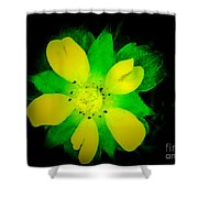 Yellow Buttercup On Black Background Shower Curtain