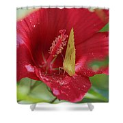 Yellow Butterfly On Red Hibiscus Shower Curtain