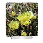 Yellow Cactus Blooms Shower Curtain