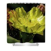 Yellow Cactus Blossom Shower Curtain