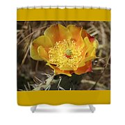 Yellow Cactus Flower On Display Shower Curtain