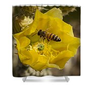 Yellow Cactus Flower With Wasp Shower Curtain