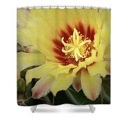 Yellow Cactus Plant Flower Shower Curtain