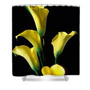 Yellow Calla Lilies  Shower Curtain by Garry Gay
