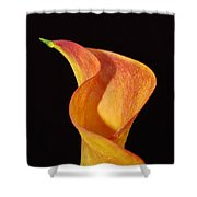 Yellow Calla Lily Flower 53 Shower Curtain