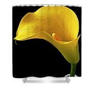 Yellow Calla Lily In Black And White Vase Shower Curtain by Garry Gay