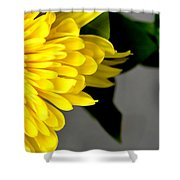 Yellow Chrysanthemum Flower Shower Curtain
