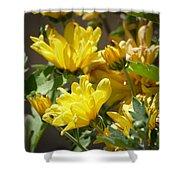Yellow Chrysanthemum Shower Curtain