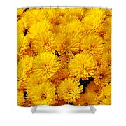 Yellow Chrysanthemums Shower Curtain