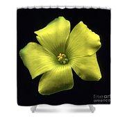 Yellow Clover Flower Shower Curtain
