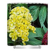 Yellow Cockscomb Shower Curtain