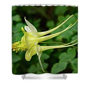 Yellow Columbine Profile Shower Curtain