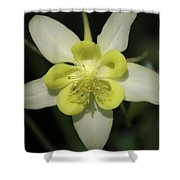 Yellow Columbine Squared 2 Shower Curtain