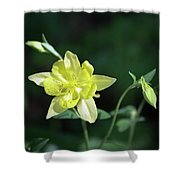 Yellow Columbine Squared Shower Curtain