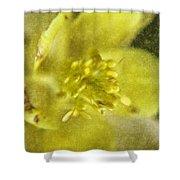 Yellow Columbine Shower Curtain