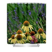 Yellow Coneflowers And Lavender 1633 H_2 Shower Curtain