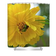 Yellow Cosmos Flower Shower Curtain
