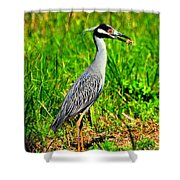 Yellow Crested Night Heron Catches A Fiddler Crab Shower Curtain