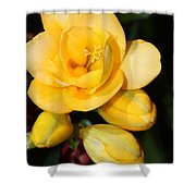 Yellow Crocus Closeup Shower Curtain