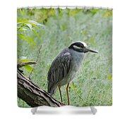 Yellow-crowned Night Heron 1 Shower Curtain