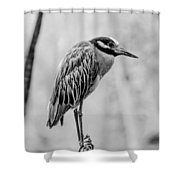 Yellow-crowned Night Heron Black And White Shower Curtain