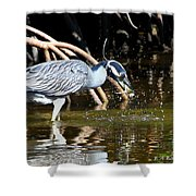 Yellow Crowned Night Heron Catches A Crab Shower Curtain