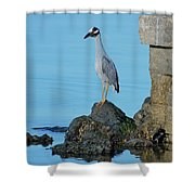 Yellow Crowned Night Heron Rocking It Out Shower Curtain