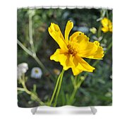 Yellow Cup Shower Curtain