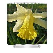 Yellow Daffodil 2 Shower Curtain