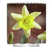 Yellow Daffodil Shower Curtain