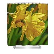 Yellow Daffodil May 2016. Shower Curtain