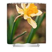 Yellow Daffodil Shower Curtain