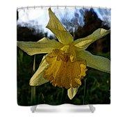 Yellow Daffodils 5 Shower Curtain
