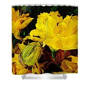Yellow Daffodils 6 Shower Curtain