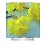 Yellow Daffodils Artwork Spring Flowers Art Prints Nature Floral Art Shower Curtain