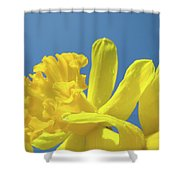 Yellow Daffodils Flowers Art Blue Sky Spring Baslee Troutman Shower Curtain