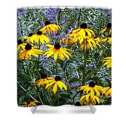 Yellow Daisies And Purple Sage Shower Curtain