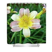 Yellow Daylily Shower Curtain