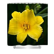 Yellow Daylily Flower Shower Curtain